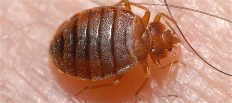 five ways to dispose of bed bug infested bedding abc