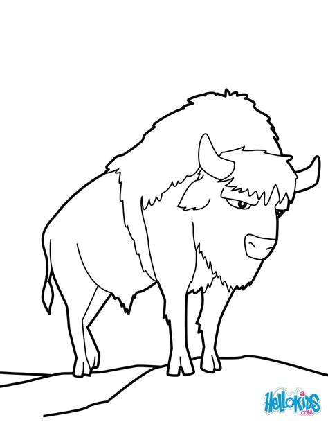American Buffalo Coloring Pages Hellokids Com Bison Coloring Pages
