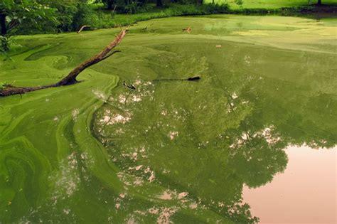 controlling pond algae outdoortheme