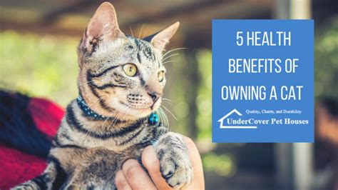 7 Benefits Of Owning A Pet by 5 Health Benefits Of Owning A Cat Undercover Pet Houses