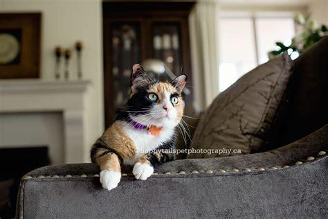 modern cat tree modern cat tree by danchanand on etsy pet ruby pearl burlington cat photographer modern