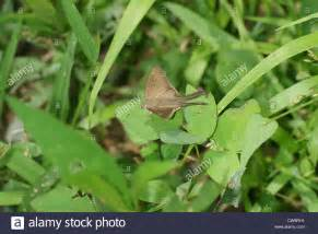 moth on leaf moth on leaf stock photo royalty free image 50003213 alamy