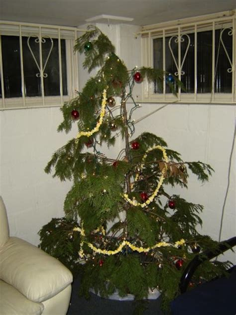 sad looking christmas trees s top notch november advice spruce up your tree coleman homes news and events