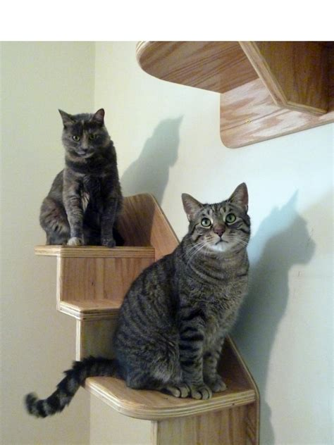 the best cat condos beds and shelves diy home decor and