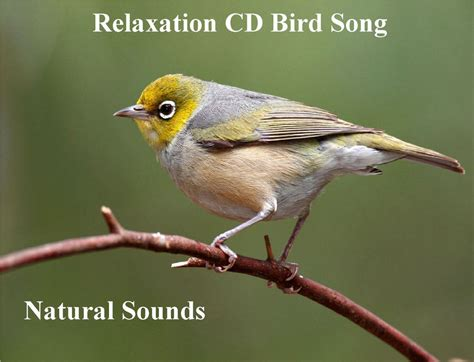 natural sounds bird song cd for relaxation sleep aid