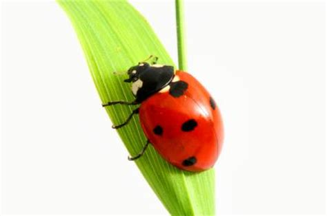 Home Interior Design Tips by Ladybugs Bring Good Luck Lovetoknow
