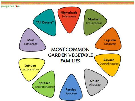 Companion Planting, Part I: Know Your Plant Families   The