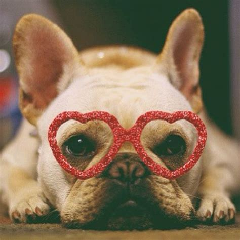 valentines day animals 20 most cutest s day dogs home design and interior