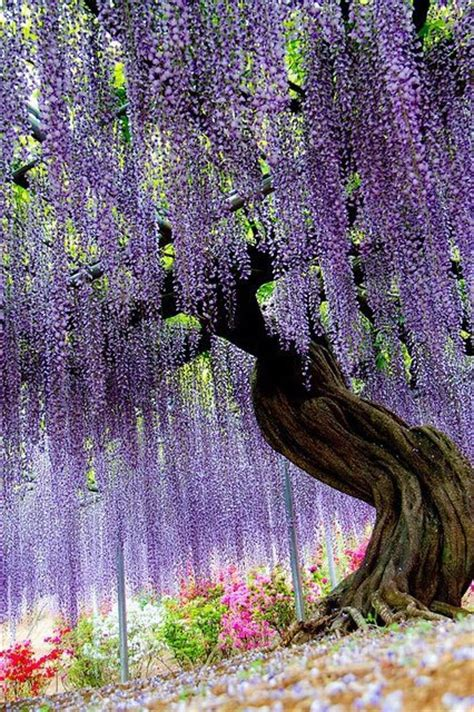ashikaga flower park showme nan ashikaga flower park tochigi japan