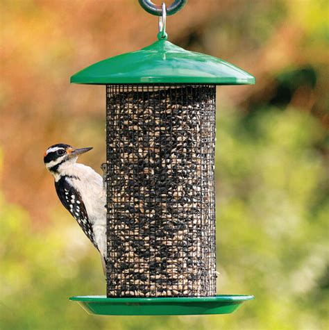 All About Bird Feeders Bird Feeders Squirrel Proof Bird Cages