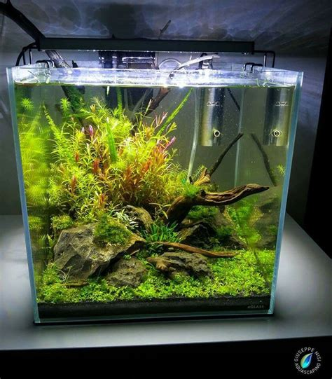 membuat aquascape nano tank 17 best images about nano aquas on pinterest cubes