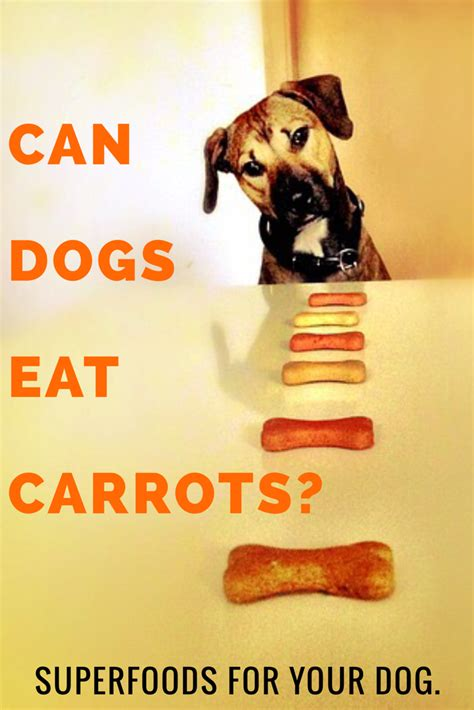 can dogs eat carrots can dogs eat carrots superfoods for dogs doggies