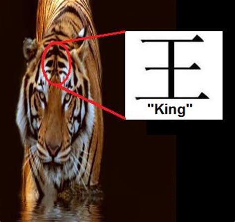 facts about the new year tiger tiger in culture south china tiger tiger