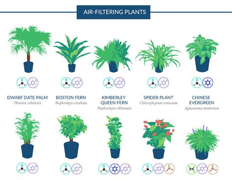 best plants for air quality infographic top 18 houseplants for purifying the air you