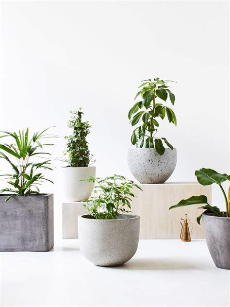 Planters Astounding Large Indoor Plant Pots Large Planter Large Indoor Planters