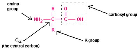 structural formula chemistrytutorvistacom amino acids definition isoelectric point zwitterions