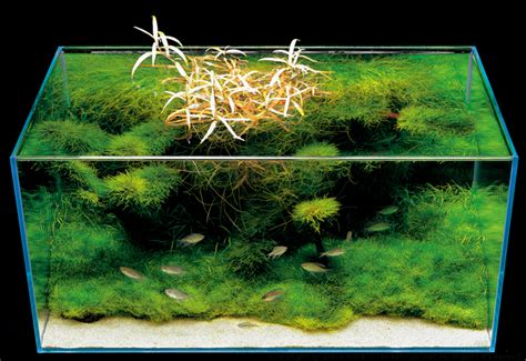 Amano Aquascaping Nature Aquarium Photographs Amanotakashi Net