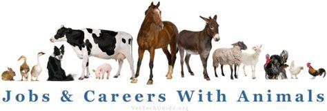 animal careers wildlife animal related keywords wildlife animal