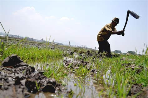 beginillah kondisi sektor pertanian di jabar mongabay co id
