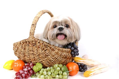 healthy snacks for dogs healthy treats for dogs boo boo s best
