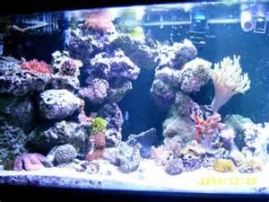 reef aquascaping ideas aquascaping hobby aquatics pinterest