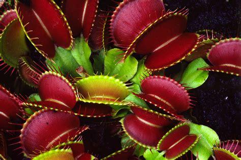imagenes de animales y plantas de brasil 191 conoces las plantas carn 237 voras flores castillon