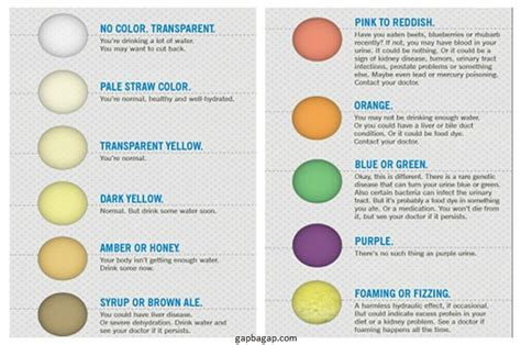 what does color what the color of your urine says about you gap ba gap