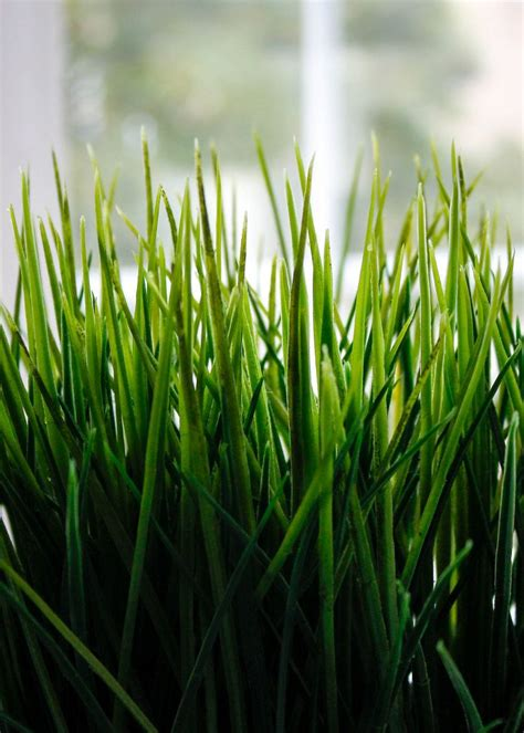 high grass  blue sky bilder und fotos creative