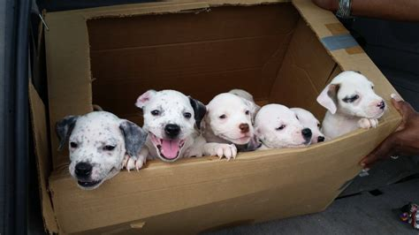 puppies in a box a box of happy puppies aww