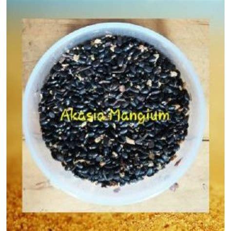 jual benih akasia mangium