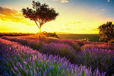 Lavendelfelder Provence duftende lavendelfelder in der provence urlaubsguru de
