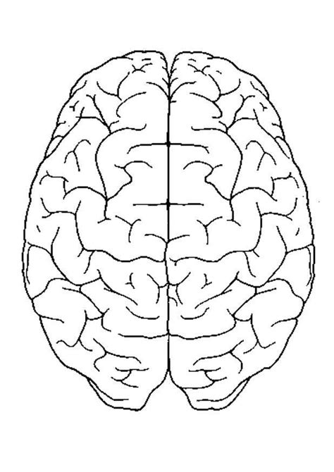 brain template human brain coloring pages coloring home