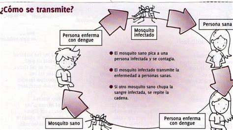 imagenes de vectores que transmiten enfermedades 191 c 243 mo se transmite el dengue