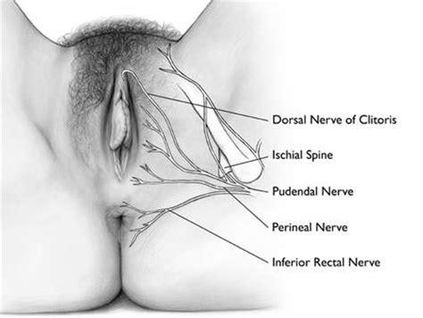 climaxing in a womens vigina clitoris 187 dr jack lewis