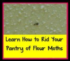 How To Get Rid Of Pantry Pests by 1000 Images About Bugs On Mosquito