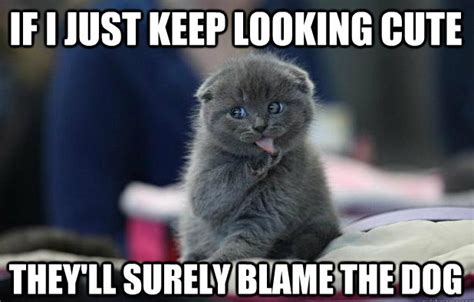 Cute Kitten Meme - hilarious cat memes april 2014