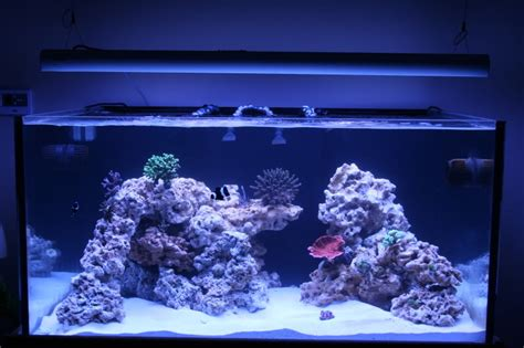 aquascape reef tank img reef aquascapes pinterest aquariums