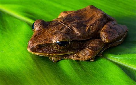 una rana a frog 8426350933 11 ranas con poderes extraordinarios marcianos