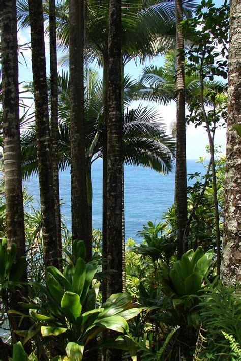 hawaii tropical botanical garden aloha journal aloha witajcie w tropikalnym raju naogrodowej pl