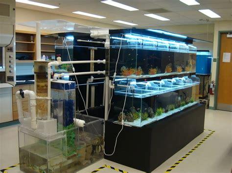 fish tank room design 17 best ideas about fish on betta betta fish and buy fish tank