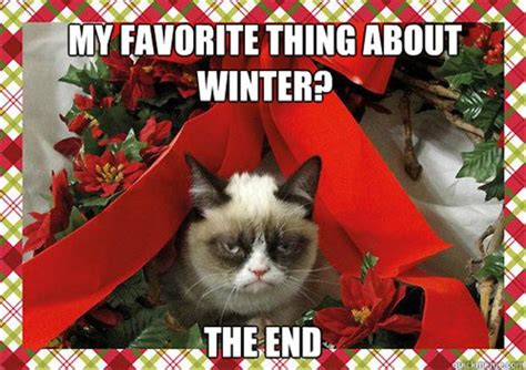 grumpy cat my favorite thing about winter is when it is