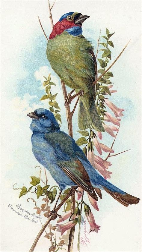 best 25 vintage bird illustration ideas on pinterest