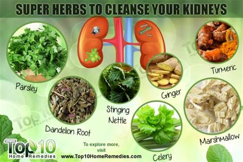 Detox Kidneys With Parsley by Top 10 Herbs To Cleanse Your Kidneys Top 10 Home