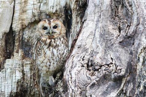imagenes de animales que se camuflan 8 animales que se camuflan en la naturaleza