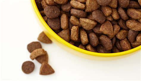 puppy food without chicken what you don t about using chicken by products in food urdogs