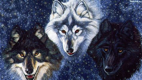 black and white anime wolves 3 background wallpaper trzy wilki śnieg