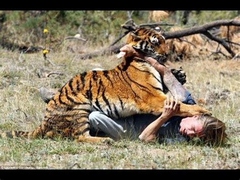 imagenes impresionantes de ataques de animales agresi 243 n animal 3 ataque de animales en vivo youtube