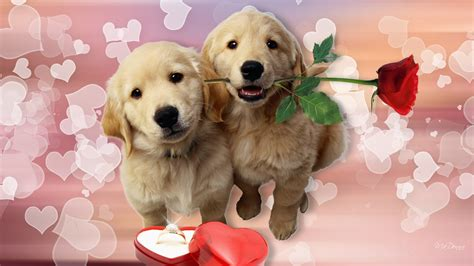 s puppies simplywallpapers puppys roses dogs puppy ring golden retriever pup