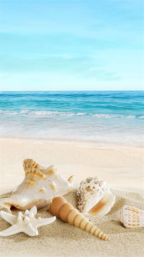 wallpaper iphone beach nature sunny sea shell beach iphone 6 wallpaper color