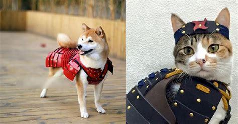 Kostum Kelinci Hoodie Untuk Kucing Anjing lucu banget kostum samurai untuk anjing dan kucing peliharaan okezone lifestyle